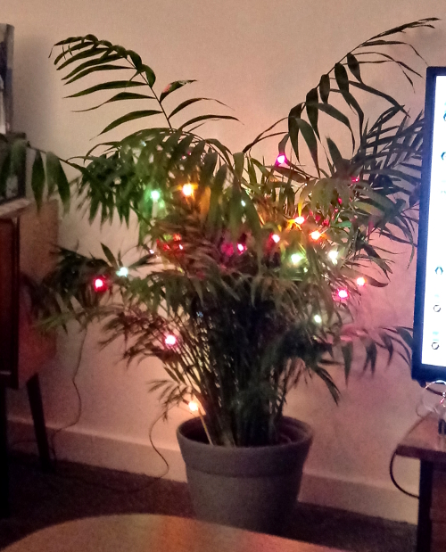 Plant with fairy lights