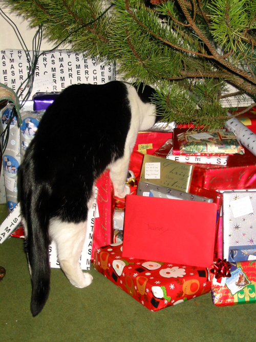 Christmas cat, 2005