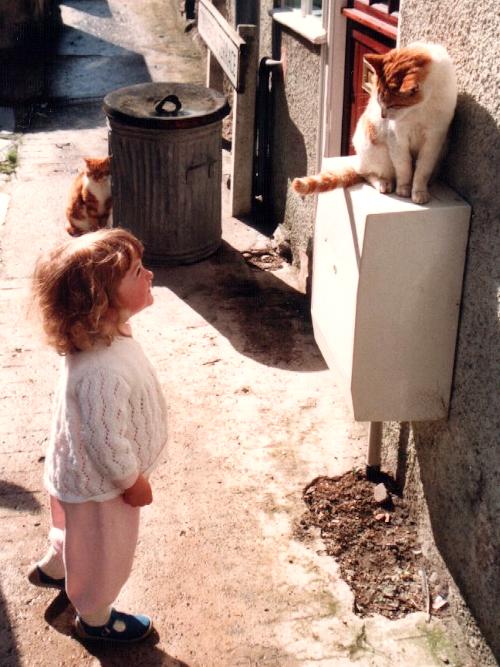 Cats, September 1987
